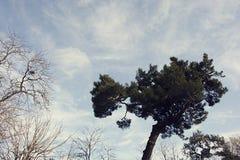 Cielo, nubes, árbol y viento Fotos de archivo libres de regalías