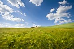 Cielo, nubi e campi di azzurri Immagini Stock