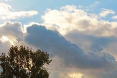 Cielo nublado con el árbol de eucalipto fotos de archivo
