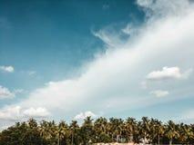 Cielo nublado hermoso con los árboles exóticos imagenes de archivo