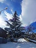 Cielo nublado Salida del sol Visión agradable nieve Invierno fotos de archivo