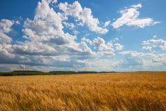 Cielo nublado sobre campo de oro lluvia antes foto de archivo libre de regalías