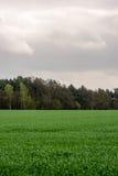 Cielo nublado sobre un bosque Foto de archivo