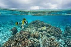 Cielo nublado subacuático de los pescados tropicales del arrecife de coral Foto de archivo