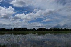 Cielo-nuvole dell'asiatico del giacimento del riso Fotografia Stock Libera da Diritti
