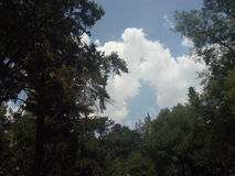 Cielo, nuvole ed alberi - Cielo, rboles del ¡ dei nubes y à Fotografia Stock Libera da Diritti