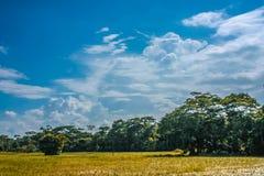 Cielo nuvoloso, albero e campo immagini stock libere da diritti
