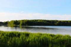 Cielo nuvoloso blu del paesaggio bielorusso e giacimento di grano verde fotografia stock