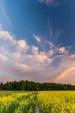 Cielo nuvoloso blu sopra il giacimento del seme di ravizzone dopo il tramonto Fotografie Stock Libere da Diritti