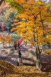 Cielo nuvoloso della foglia di acero di autunno Fotografia Stock