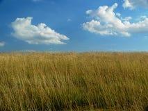 Cielo nuvoloso e campo luminosi dell'azienda agricola Immagini Stock Libere da Diritti