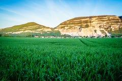 Cielo nuvoloso e montagna verdi del giacimento di grano Fotografie Stock