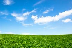 Cielo nuvoloso ed erba Immagine Stock
