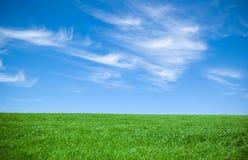 Cielo nuvoloso ed erba Fotografie Stock Libere da Diritti