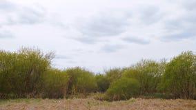 Cielo nuvoloso sopra gli alberi verdi ed il lasso di tempo dei cespugli, moto veloce video d archivio
