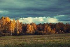 Cielo oscuro sobre la arboleda iluminada del abedul en otoño Imagenes de archivo