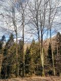 Cielo para los árboles imagen de archivo libre de regalías