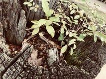 Cielo pianta/del porto sicuro fotografia stock libera da diritti