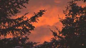 Cielo rojo de la puesta del sol en bosque almacen de video