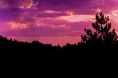 Cielo rosato di tramonto e foto delle nuvole all'abetaia immagine stock