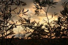 Cielo rosso tramite le foglie Fotografia Stock
