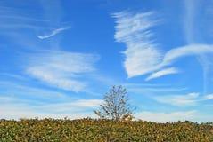 cielo scenico blu Immagini Stock