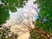 Cielo sobre árbol foto de archivo