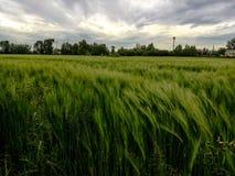 Cielo sobre campo de la cosecha imagenes de archivo