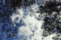 Cielo sobre el bosque del pino en el escupitajo de Curonian Fotografía de archivo