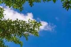 Cielo sobre los árboles en el bosque Foto de archivo
