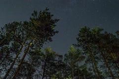 Cielo stellato nella foresta Fotografia Stock Libera da Diritti