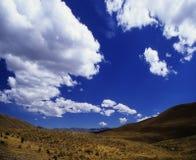 Cielo su Puya Raimondy #3 fotografia stock libera da diritti