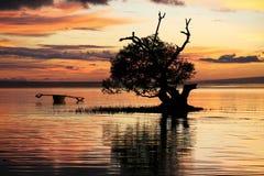 cielo sul tramonto Filippine della mangrovia del siqijour del fuoco Fotografie Stock Libere da Diritti