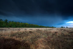 Cielo tempestoso sopra la palude con i cottongrass Fotografia Stock Libera da Diritti
