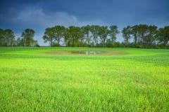 Cielo tempestoso sopra un campo verde Fotografia Stock
