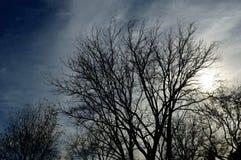 Cielo tempestuoso nublado del árbol de la silueta foto de archivo