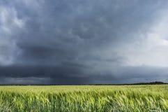Cielo tempestuoso sobre el campo de trigo, paisaje Fotos de archivo libres de regalías