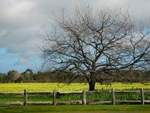 Cielo tempestuoso y campo amarillo imagen de archivo