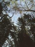 Cielo tranquilo Imagen de archivo