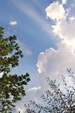 Cielo a través de árboles Fotografía de archivo libre de regalías
