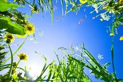 Cielo a través de la hierba con las flores Imagen de archivo