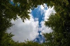 Cielo a través de los árboles Foto de archivo libre de regalías