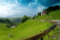 cielo variopinto della montagna di paesaggio dell'erba della mucca Fotografia Stock Libera da Diritti