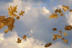 Cielo ventoso con il salto dei fogli Fotografie Stock Libere da Diritti