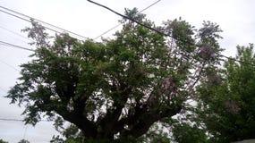 Cielo verde del día de la nube de la naturaleza del árbol imagenes de archivo