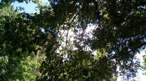 Cielo verde del día de la nube de la naturaleza del árbol Imagen de archivo