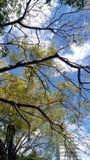 Cielo verde del día de la nube de la naturaleza del árbol Imagen de archivo libre de regalías