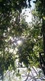 Cielo verde del día de la nube de la naturaleza del árbol Fotos de archivo