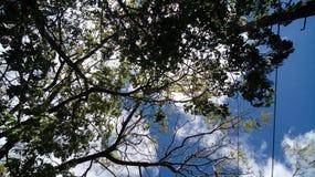 Cielo verde del día de la nube de la naturaleza del árbol foto de archivo