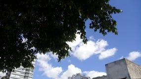 Cielo verde del día de la nube de la naturaleza del árbol Fotografía de archivo libre de regalías